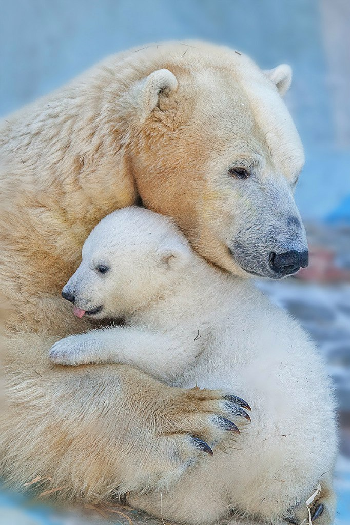 Рабочая встреча по содержанию и разведению белого медведя